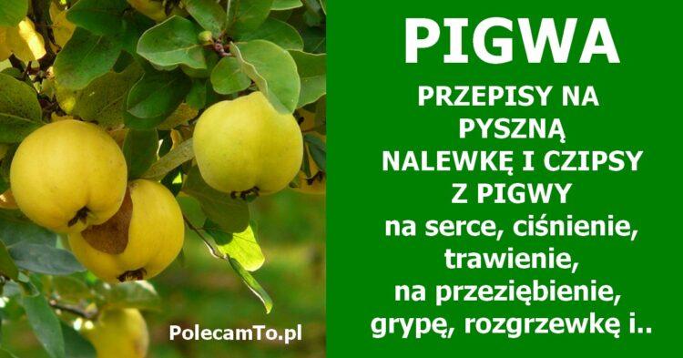 PolecamTo.pl-pigwowka